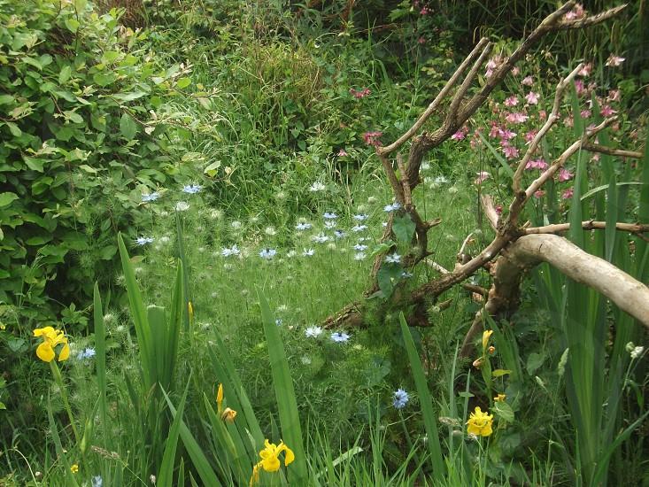 Wild garden photo