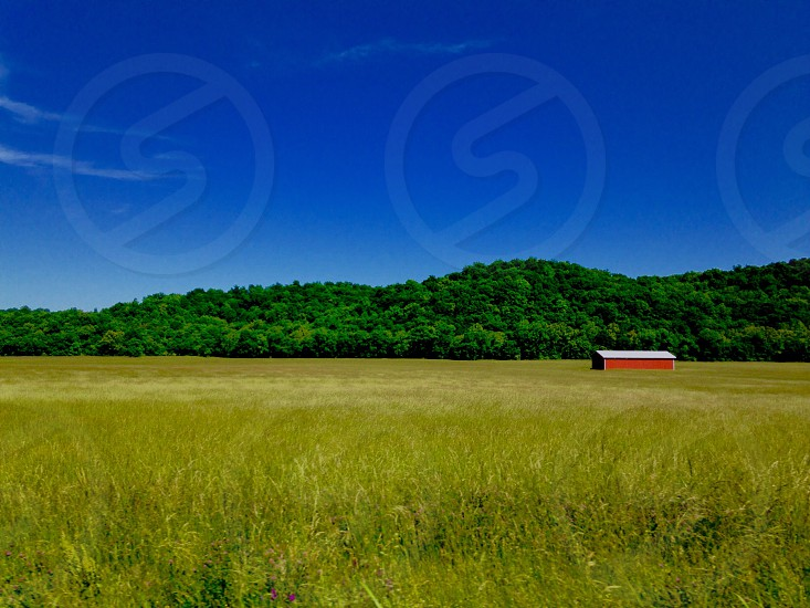red and white bard in the middle of the fields beyond is a thick forest under blue sky during daytime photo