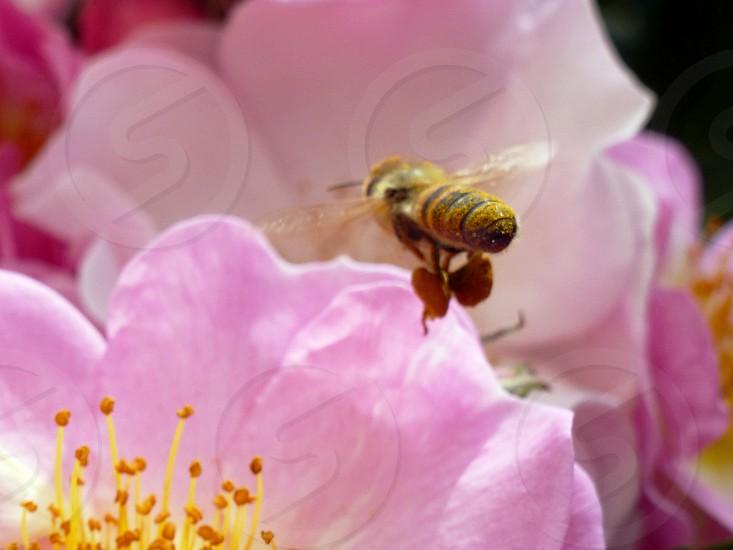 the bee photo
