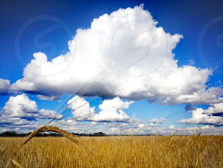 Clouds over barley field. photo