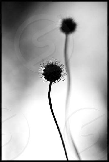 black round plant photo