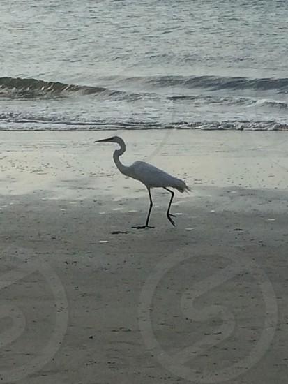 Bird on beach photo