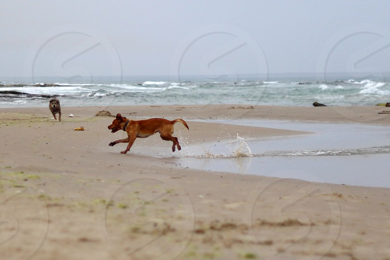 two dogs playing on beach photography photo