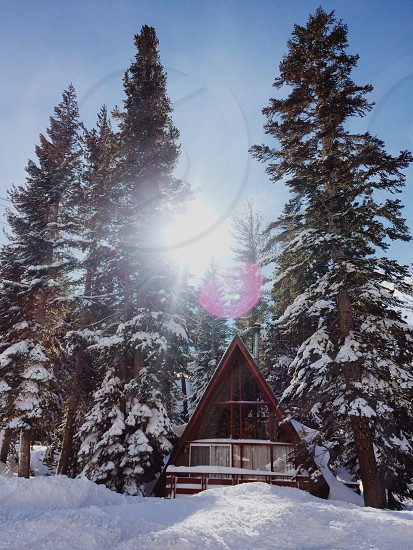 sunlight rays through brown wooden house beside green pine trees under blue sky photo