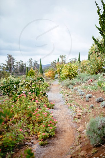 dirt trail with plants on both sides photo