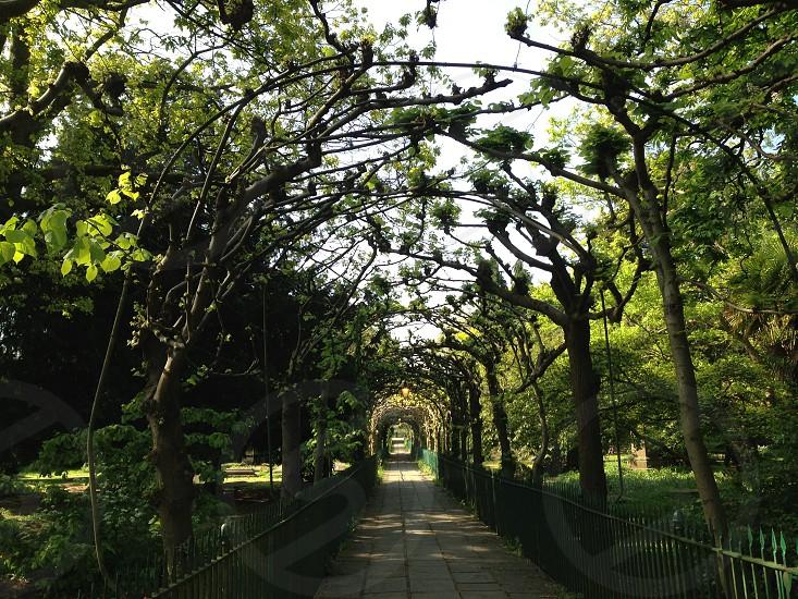 Beautiful pathway - Birdcage walk Bristol  photo