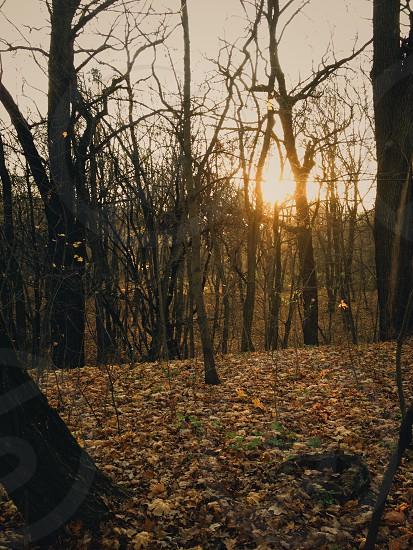 autumn autumn forest autumn season photo