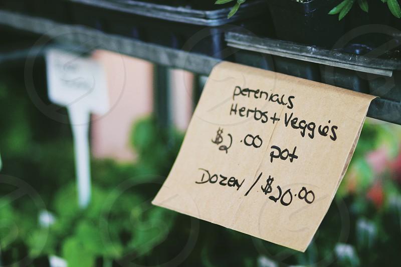 Fresh plants for sale at the Farmer's Market. Herbs and veggies perennials healthy organic photo