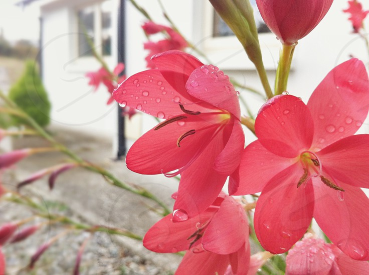 pink flowers macro photo photo