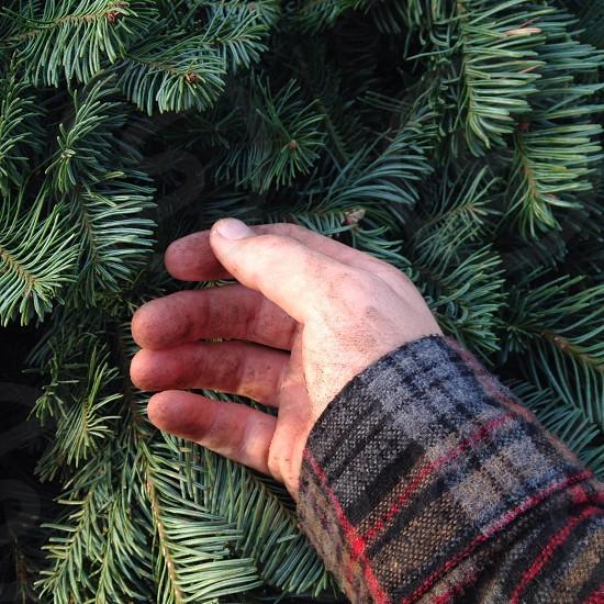 man in gray wool plaid shirt touching pine neeles photo