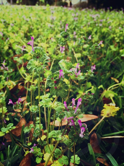 Spring wild flowers purple outdoors nature up close photo