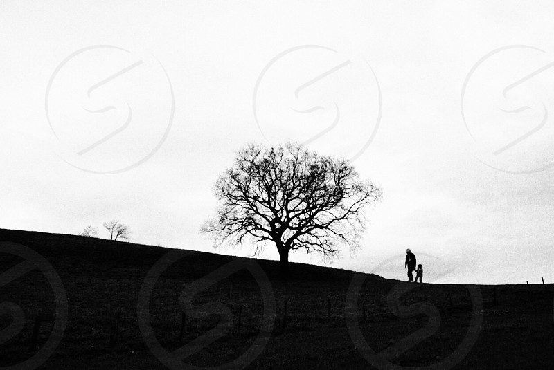 silhouette of person with child walking towards leafless tree on hilltop photo