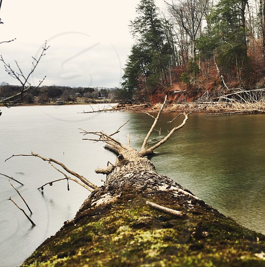 fallen tree on river with trees on riverbanks under white skies during daytime photo