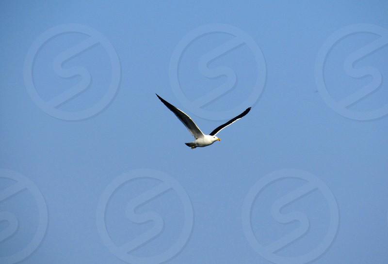 Birdanimalnaturewingswildlifeflying photo