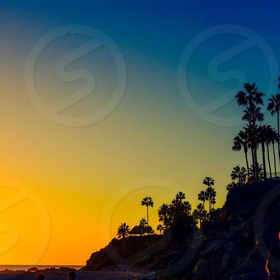 trees on sunset photo