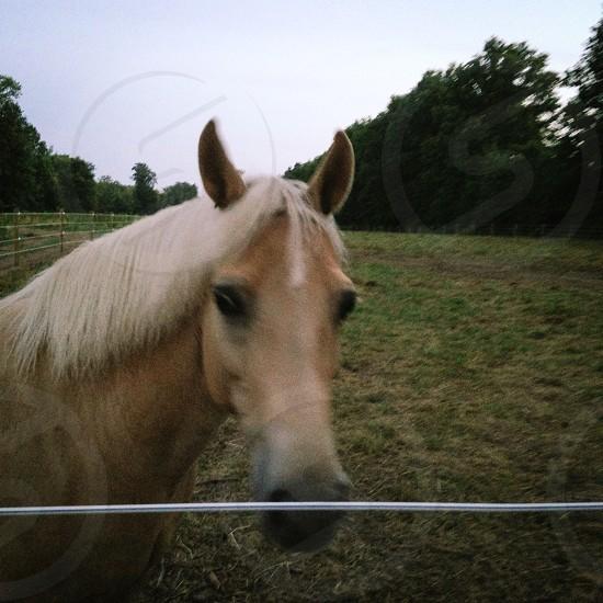 Horse  pony stallion bronco farm pasture photo