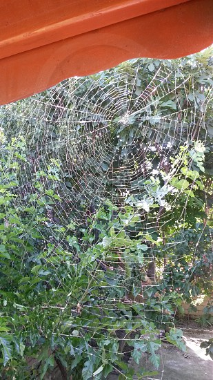 spider web nature design pattern perfection photo