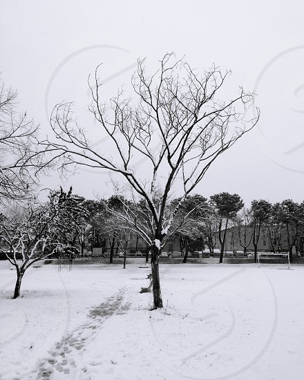 leafless tree and snow view photo