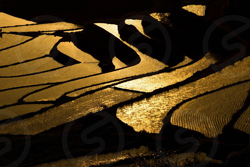 rice terraces during golden hour photo