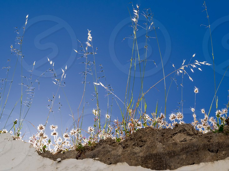 Backlit flowers and grasses on a wall in Casares Spain photo