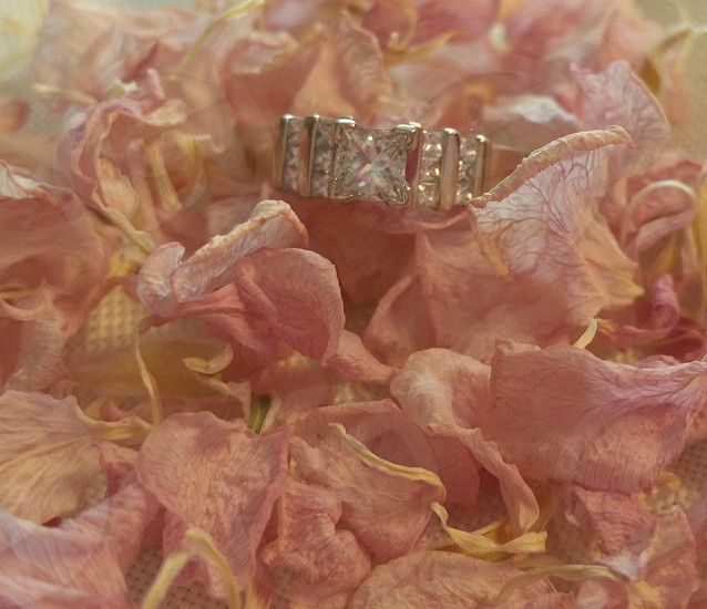 pink flower petals and engament ring photo