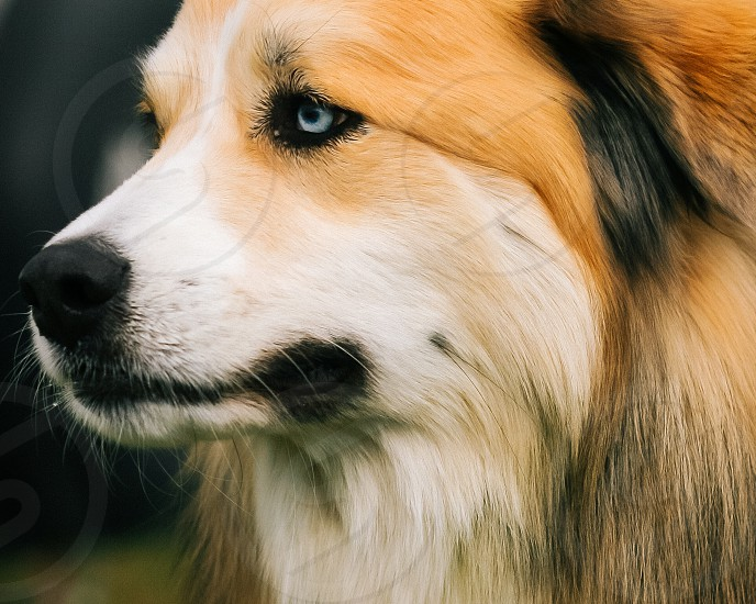 dogs face photo