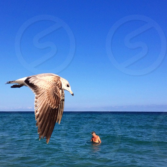 brown and white long beaked large bird photo