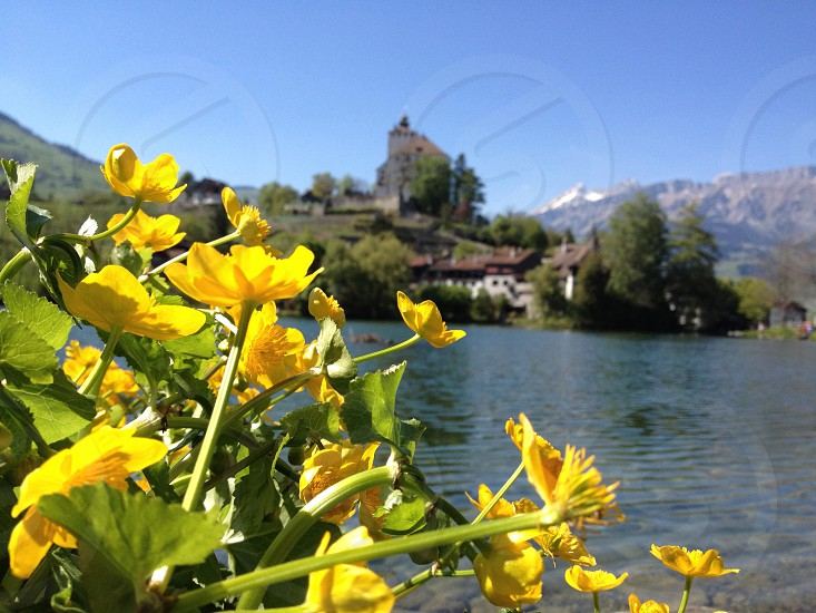 I used to pass this castle on my way to work. it's in Werdenberg Switzerland photo