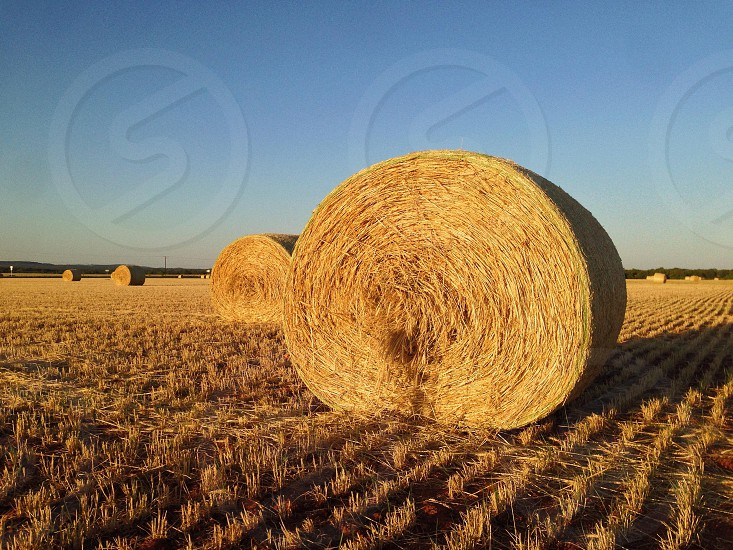 Fresh Texas hay bales on a crisp spring evening. photo