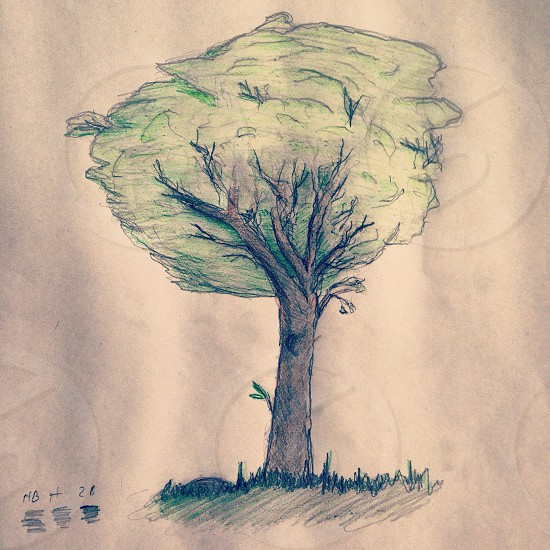 Tree: Personal Sketch. photo