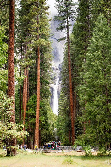 Yosemite National Park Water Fall Redwoods tourists photo