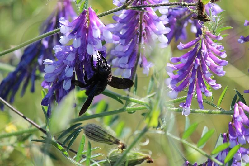 bee garden photo