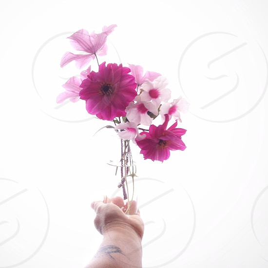purple and white flower on hand photo