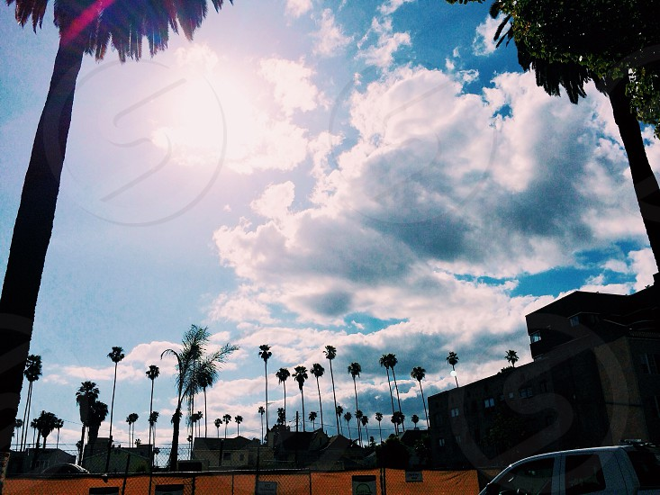 Beautiful day in Hollywood photo