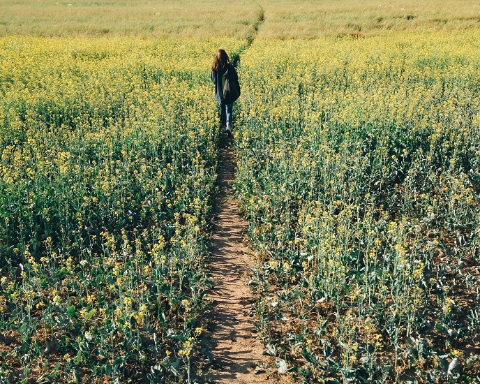 person walking through field of flowers photo