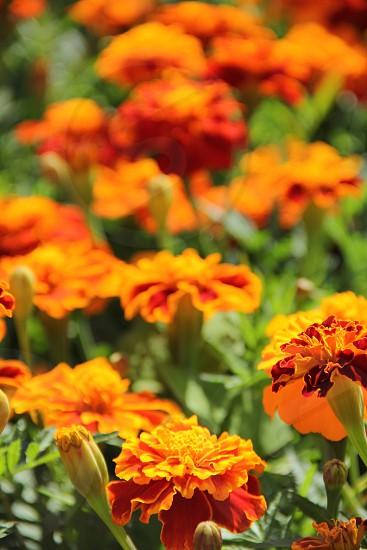Halloweenflowers photo