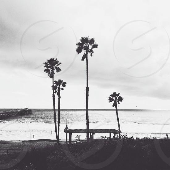 palm tree and beach view  photo