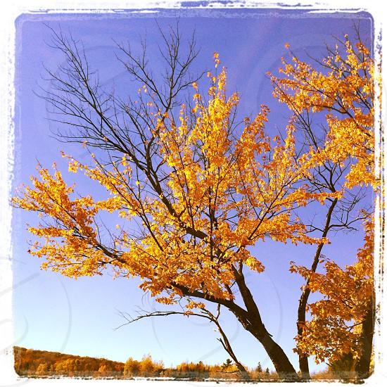 Falling tree photo