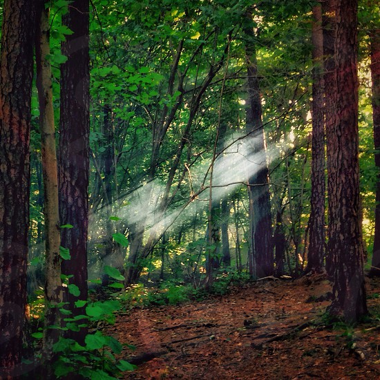 Norwegian woods forest spring Ray of light light fairy forest fairy sun rays green photo