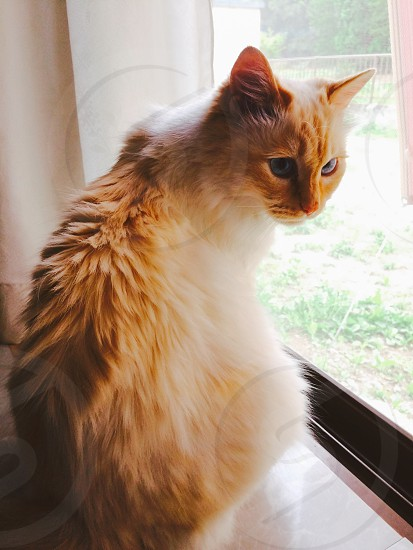 shallow focus photography of orange tabby cat on white wooden framed glass window photo