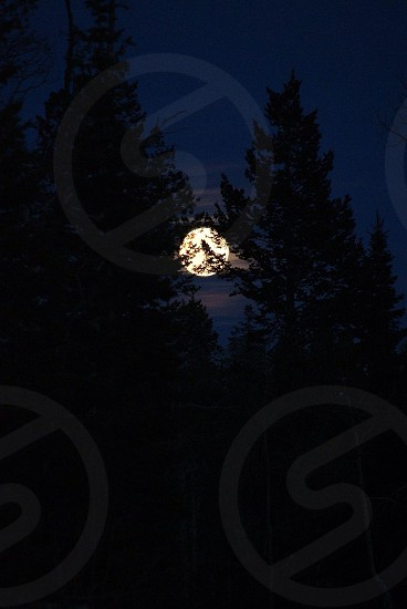 Moon behind the silhouette of mountain pines photo