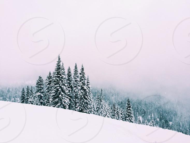Simple clean snow Tahoe ski white photo