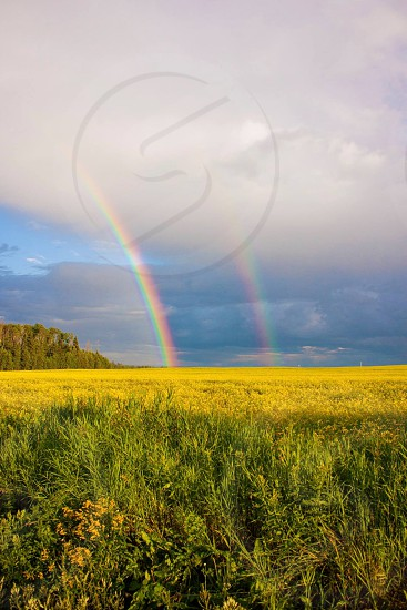 Double rainbow and field photo