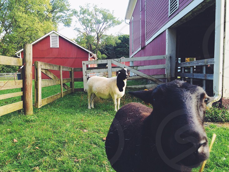 Farm barn animals red nature country photo
