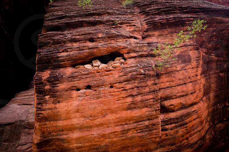 Rocks lodged into niche in slot canyon with tree growing out of rock photo