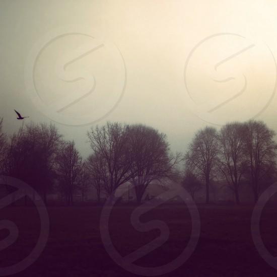 Afternoon Fog. photo