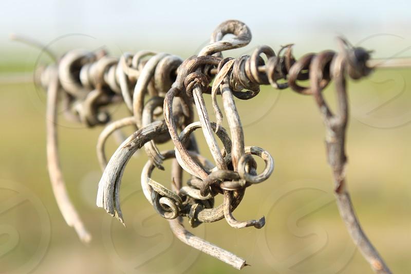 brown vines twigs photo