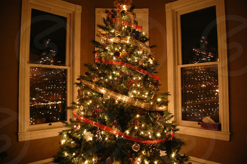 Oh Christmas tree. Oh Christmas tree. photo