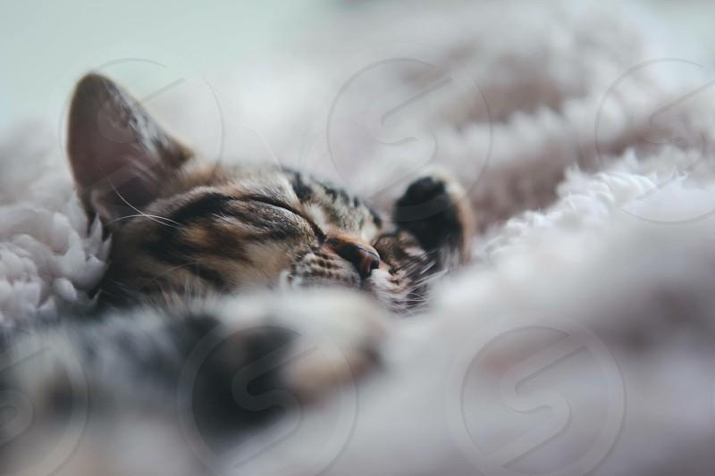 Kitten cat pets photo