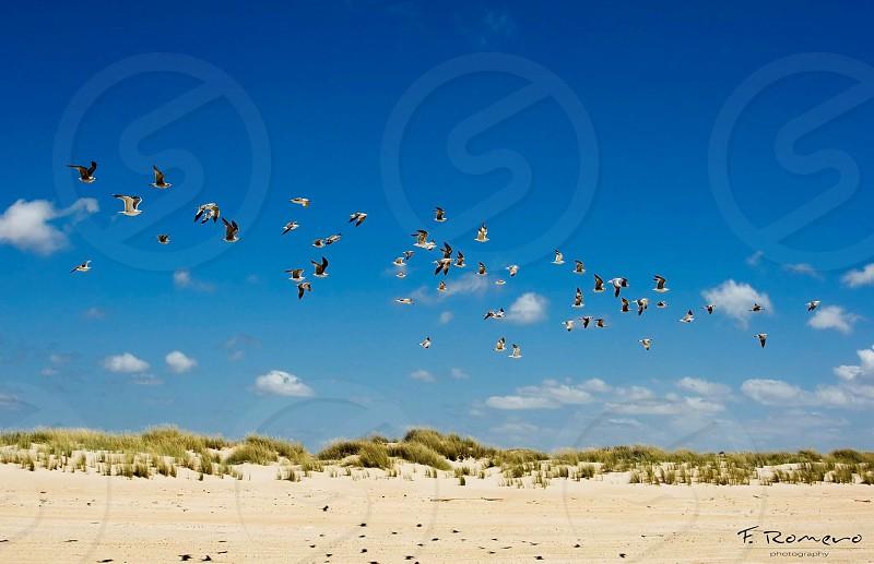 flock of flying bird during daytime photo
